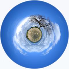 Albero di quercia su un globo desolato - Pianeta terra - Globo