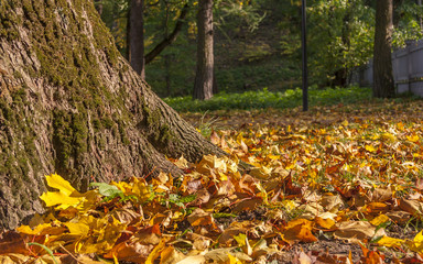 Mixture of Autumn leaves with great range of colors