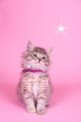 Katzenbaby mit Stern