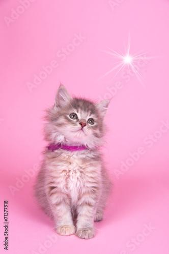 canvas print picture Katzenbaby mit Stern