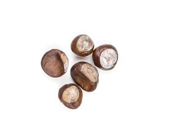 Five chestnuts laying on white background