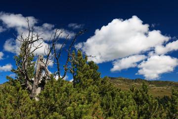 Knorriger Baum in den Bergen