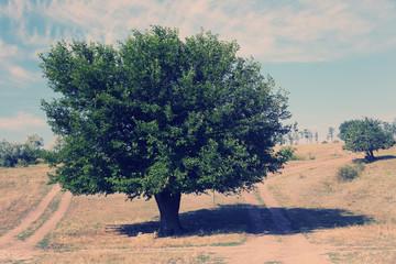 Green tree in field