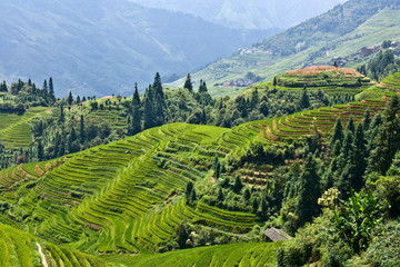 Rice terraces in the mountains.