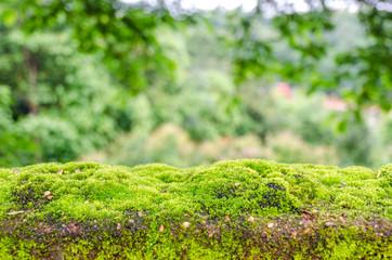 Moss, small flowerless plant