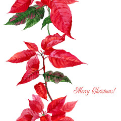 Background  with red poinsettia-09