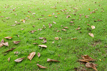 Fallen leaves on the grass meadow