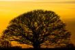 canvas print picture - Natur - mächtiger Baum