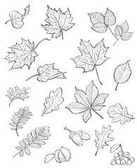 autumn leaves, chestnuts, acorns. black contour