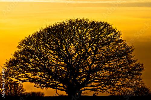 canvas print picture Natur - mächtiger Baum