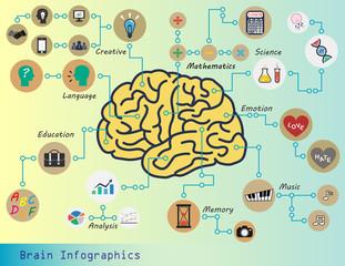 Brain Infographics