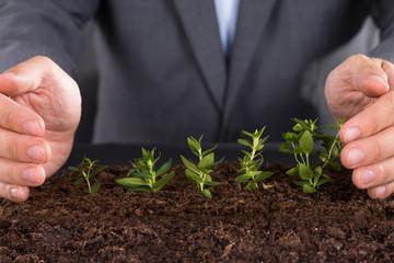 Protecting growing saplings