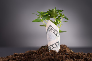 Money growing from soil