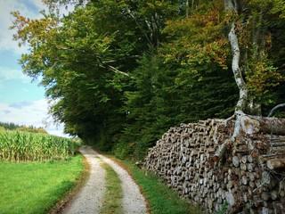 Feldweg zwischen Brennholz und Maisfeld