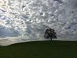 canvas print picture - Eiche unterm Wolkenhimmel thront auf Grashügel