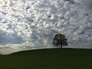 Eiche unterm Wolkenhimmel thront auf Grashügel