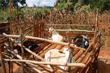 Agricultural landscape in Tanzania - Africa