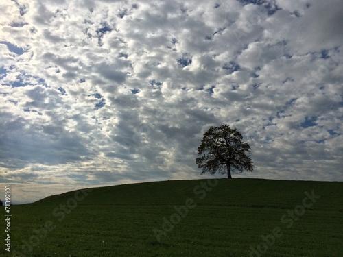 canvas print picture Eiche unterm Wolkenhimmel thront auf Grashügel
