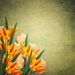 Postcard with fresh flowers tulips  and empty  place for your te