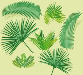 Palmenwedel mit Farn