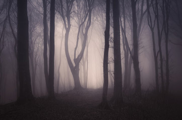 dark spooky forest with old trees on halloween