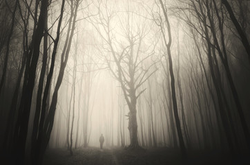 man walking past a huge old tree in a dark spooky forest