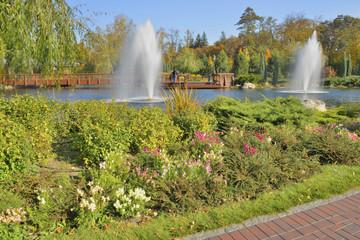 Осенние цветы на берегу озера