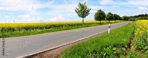 Leinwanddruck Bild Landstrasse mit Bäumen