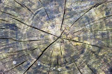 tree rings detail