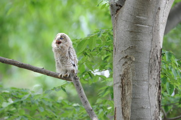 Owl (9)