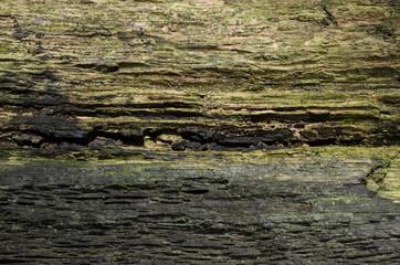 weathered tree wood