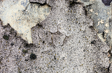 The wall texture with moss and cracked plaster and whitewash