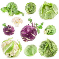 Collection of fresh cabbage