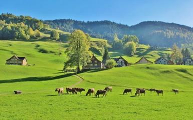 Herbst auf der Alp, Toggenburg