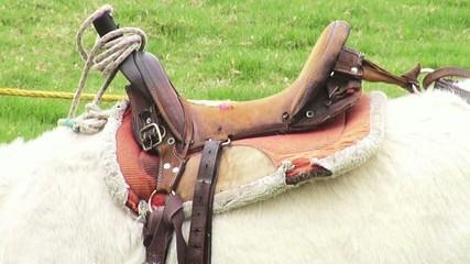 Saddle, Horses, Horseback Riding