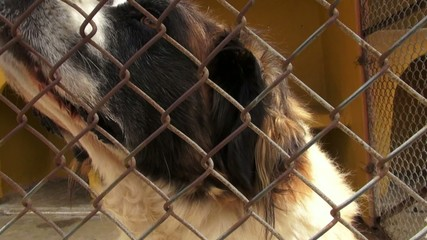 Lonely Caged Dogs, Canines, Neglect, Abuse