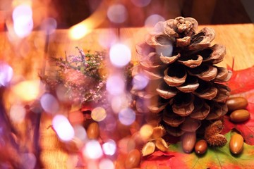Pinecone on wooden board