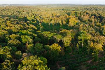 Forêt domaniale de Dourdan 91 vue du ciel
