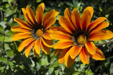 fiori 96