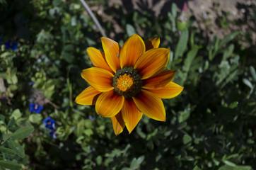 fiori 97