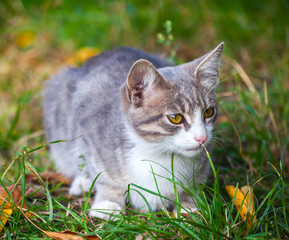 little kitten playing on the grass roadside in morning