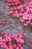 Leafs / autumn / colors / red leafs