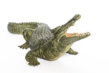 modello di Coccodrillo