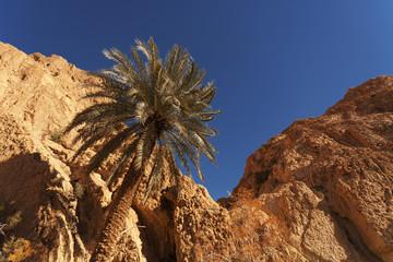 Sahara Stone Desert