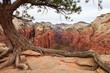 Leinwandbild Motiv Zion Canyon