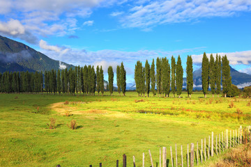 Along green fields avenues of cypresses grow
