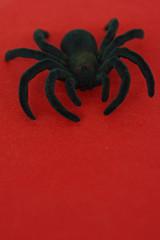 Haarige Halloween-Spinne