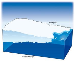 Pôles - Arctique 1 - Banquise