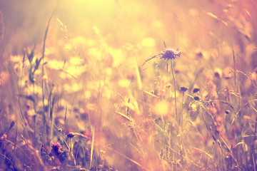 Blurry vintage meadow background