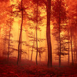 Red colored forest scene